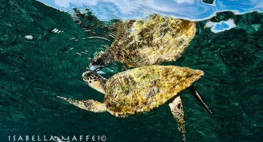 Reptiles (turtles and sea snakes)